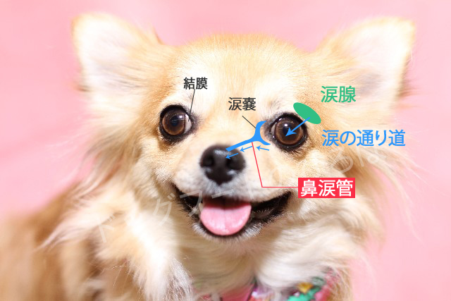 犬 涙やけ 原因 おすすめ ドッグフード カナガン