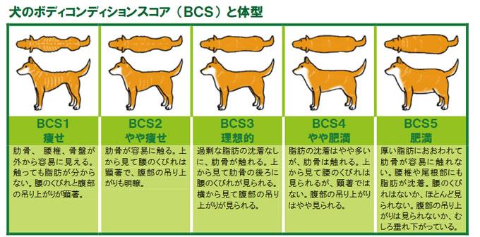 出典:「飼い主のためのペットフード・ガイドライン ~犬・猫の健康を守るために~(環境省)