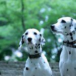 犬の平均寿命が伸びた理由は!?犬種ごとの平均寿命と長生きさせるための対策