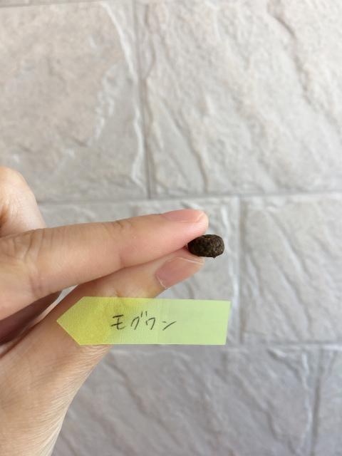 モグワンドッグフード粒の大きさ