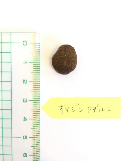 オリジンアダルトドッグの粒の大きさ