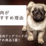 国産馬肉ドッグフードのおすすめ商品3選!&  犬に馬肉がおすすめの理由|ドッグヘルスアドバイザー解説