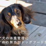 シニア犬の体重管理におすすめの無添加ドッグフード3選!| ダイエットに成功した当サイトに届いた口コミも紹介