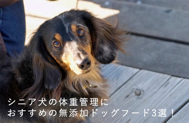 シニア犬の体重管理におすすめの無添加ドッグフード3選!