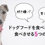 ドッグフードを食べない・食いつきが悪い愛犬に食べさせる5つの方法