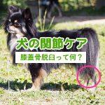 犬の関節(膝蓋骨脱臼)ケアにおすすめのドッグフードランキング|口コミ評価が高い商品&選び方のポイント