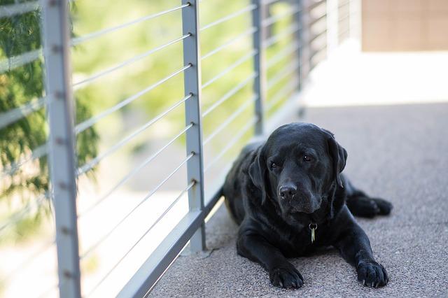 愛犬の関節を守る方法