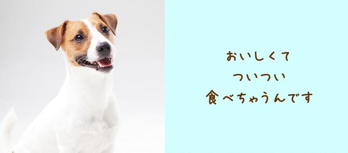 犬 食糞 対策 方法
