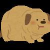 カナガンドッグフードはダイエットにおすすめ?カロリーは?【体験口コミ】愛犬が適正体重になって骨格がしっかりしたよ
