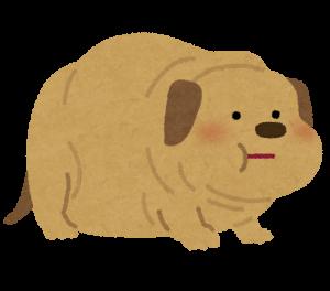 pet_fat_dog