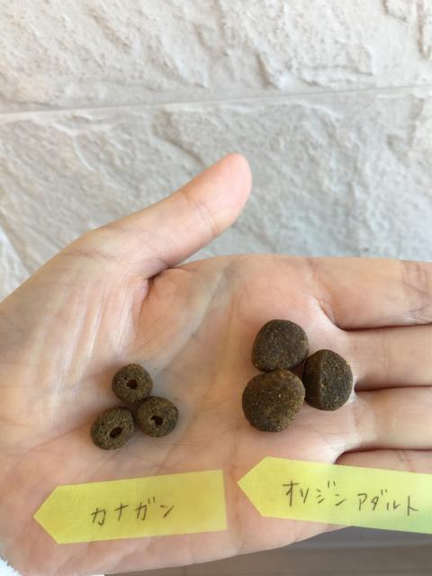 カナガンとオリジンの粒の大きさ比較
