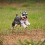 犬の尿路結石ってなに?予防方法やドッグフード選びのポイントを簡単解説|ストルバイト結石やシュウ酸カルシウム結石について