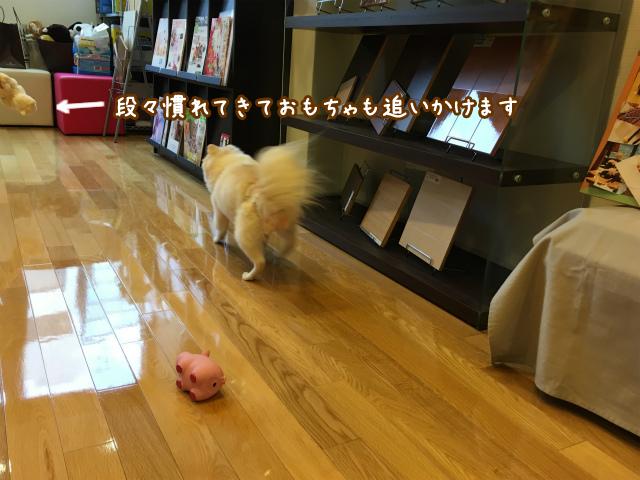 愛犬の床 ショールーム