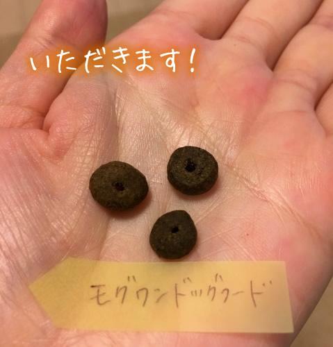 モグワンを食べてみました