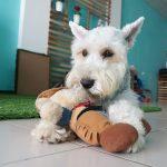 シニア犬(高齢犬)におすすめ!無添加のグレインフリーフード3選 & 長生きできるフードの選び方