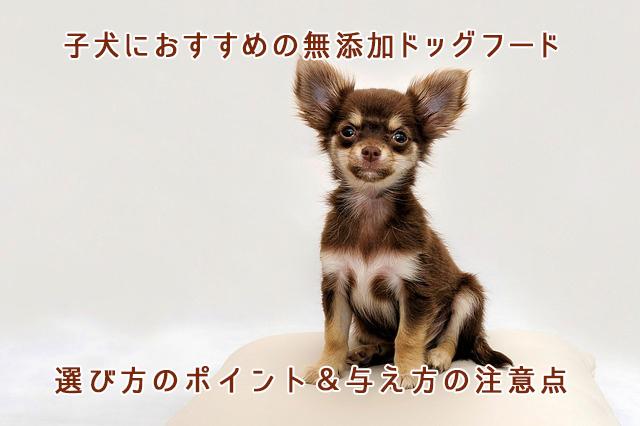 子犬におすすめの無添加ドッグフード(小型犬・中型犬)