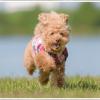 【2019】小型犬におすすめのドッグフード一覧(子犬・成犬・シニア別)|専門家が厳選しました