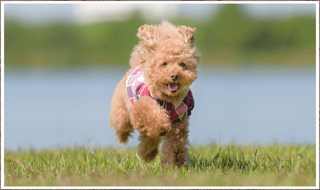 小型犬にオススメの安心安全ドッグフード